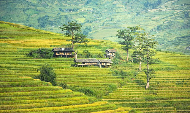 Vietnam: The perfect travel destination